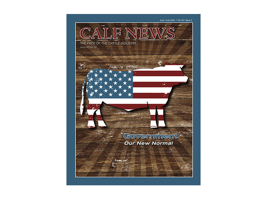 Calf News cover